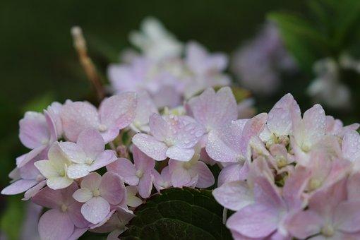 White Flower, Flora, Nature, Plant, Summer, Spring