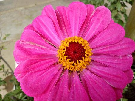 Flowers, Summer, Pistil, In Full Bloom, Flowering