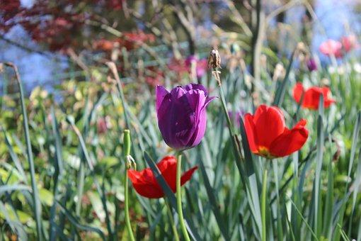 Flowers, Flower, Spring, Flowering, Plant, Garden, Blue