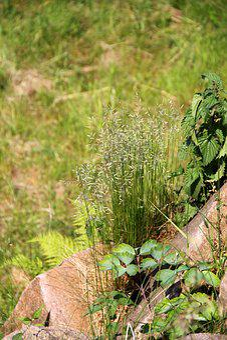 Grass, Garden, Meadow, Green, Plant, Autumn