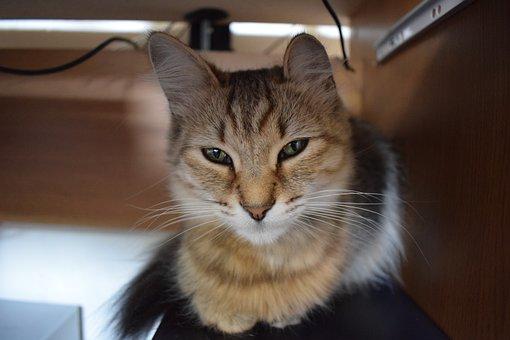 Cat, Kitten, Animal, Cute, Pet, Kitty, Feline, Fur
