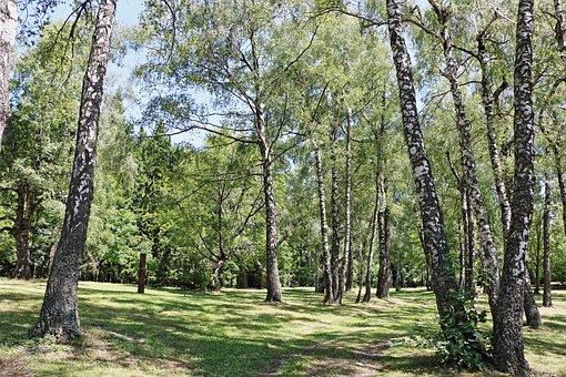 Wood, Trees, Forest, Park, Log, Nature, Bark, Trunks