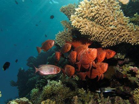 Swarm, Fish, Marine Life, Fish Swarm, Water