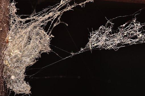 Spider Web, Spider, Nature, Close, Macro, Cobweb