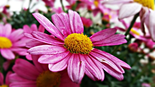 Flower, Plant, Nature, Spring, Garden, Green, Ornament
