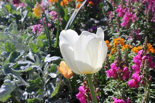 Plant, Flower, Jardin Des Plantes, Toulouse, South