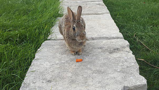 Rabbit, Bunny, Carrot, Spring, Easter, Animal, Fluffy