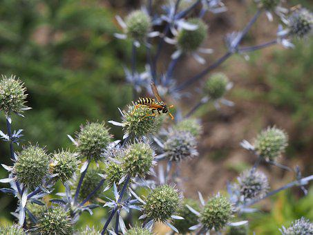 Wasp, Flower, Thistle, Fauna, Insect, Blossom, Bloom