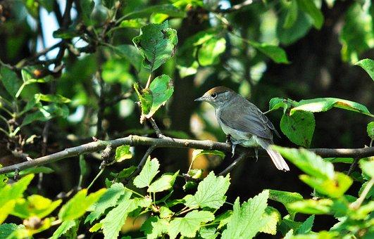 Bird, Nature, Sprig, Wild Birds, Closeup, Garden