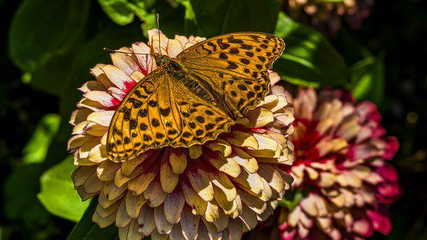 Painted Lady, Butterfly, Blossom, Bloom, Nature, Close
