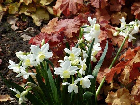 Park, Garden, Garden Design, Bed, Flowers, Spring