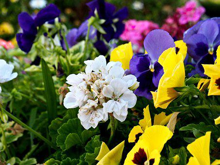 Flowers, Colors, Garden, Nature, Spring