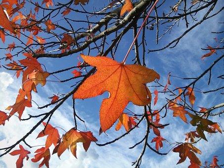 Leaves, Leaf, Autumn, Colors, Fall, Tree, Sky, Plant