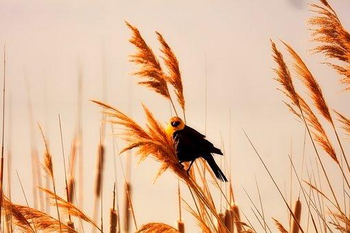 Plants, Bird, Wildlife, Beautiful, Sky, Clouds, Nature