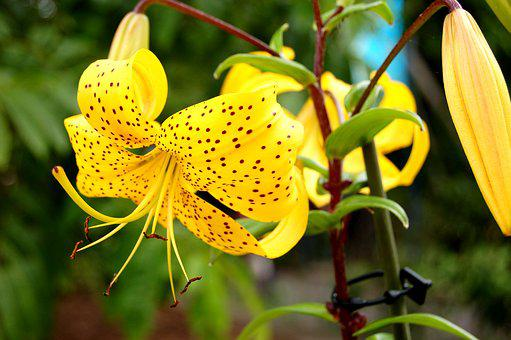 Flower, Yellow, Yellow Flower, Yellow Flowers, Nature