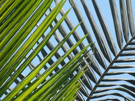 Palmas, Leaves, Palm Tree, Beach