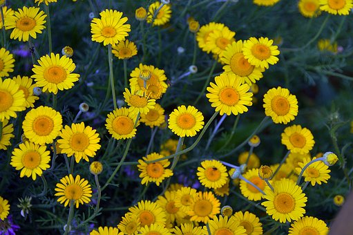 Yellow, Flowers, Summer, Nature, Summer Flowers, Plant