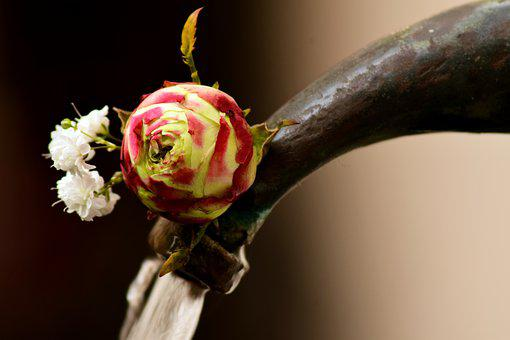 Flower, Rose, Blossom, Bloom, Close, Water, Faucet