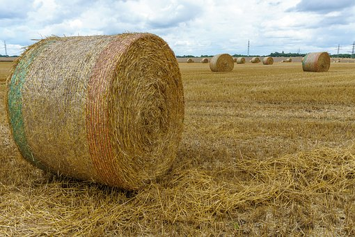 Straw Bales, Field, Hay, Straw, Agriculture, Harvest