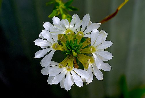 Flower, White, Blooming, Petal, Summer, Bright, Texture