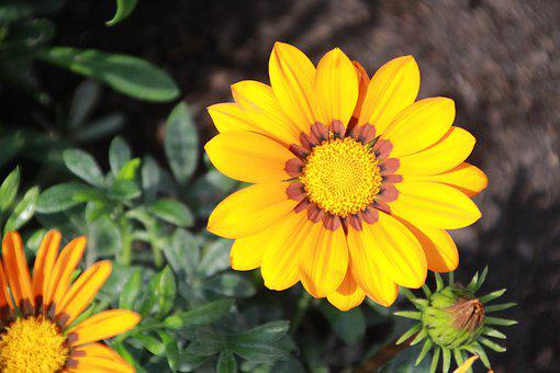 Flower, Nature, Yellow, Plant, Beauty, Bloom, Plants