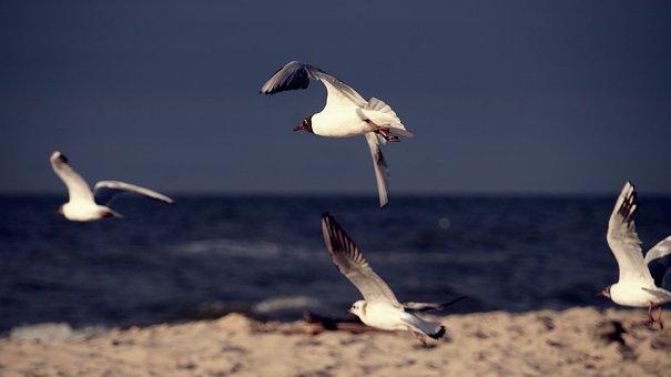 The Baltic Sea, Sea, Beach, The Coast Of The Baltic Sea