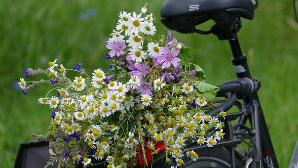 Wild Flowers, Wheel, Bike, More, Nature, Bouquet