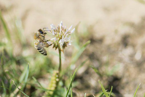 Bee, Meadow, Blossom, Bloom, Close, Insect, Fly, Summer