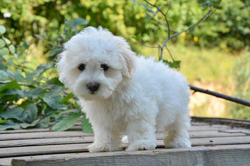 Puppy, Pup, Female, Domestic Animal, Dog, Animal, Young