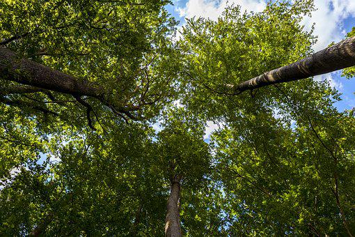 Forest, Tree, Summer, Nature, Leaves, Green