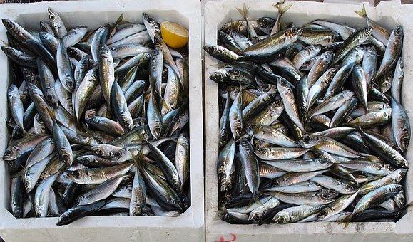 Fish, Freshly Caught, Fishing, Fresh Fish, Sea Animals