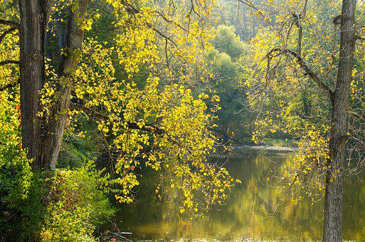 Trees, Pond, Nature, Water, Landscape, Green, Park