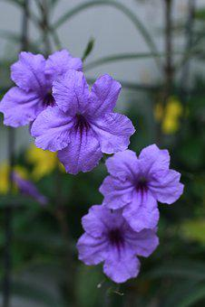 Flower, Purple, Garden, Nature, Photo, Macro, Summer