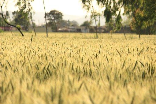 Nature, Landscape, Farm Field, Agriculture, Rural