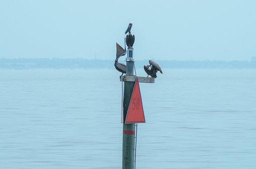 Pelican, Ocean, Wildlife, Bird, Nature, Animal, Water