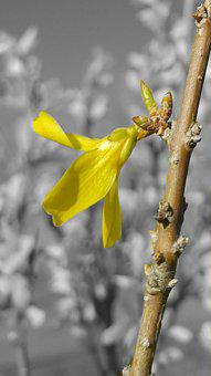 Bud, Flower, Sapling, Branch, Yellow, Yellow Flower