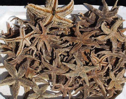 Starfish, Seafood, Freshly Caught, Fishing, Fresh Fish