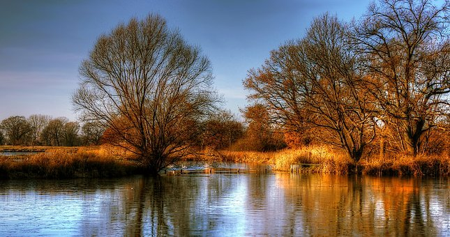 Lake, Pond, Water, Nature, Waters, Reed, Forest, Bank