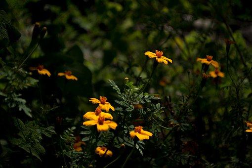 Flower, Wild, Field, Nature, Wild Flower, Wild Flora