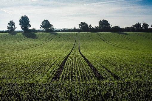 Agriculture, Getreideanbau, Cereals, Field, Cornfield