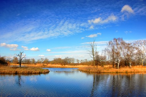 Pond, Clouds, Lake, Water, Landscape, Sky, Bank, Reed