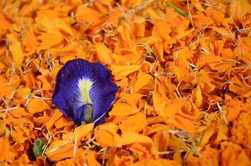 Contrast, Flowers, Bright Colours, Nature, Colour