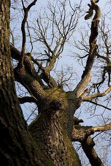 Forest, Wood, Nature, Landscape, Forests, Old Tree, Log