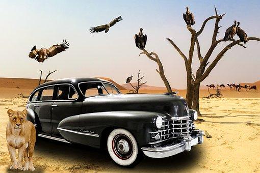 Vehicle, Oldtimer, Cadillac, Desert, Vulture, Caravan