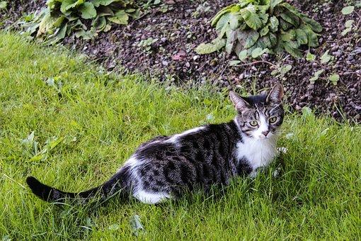 Cat, Tabby, Tabby Cat, Kitty, Adorable, Furry, Cat Face