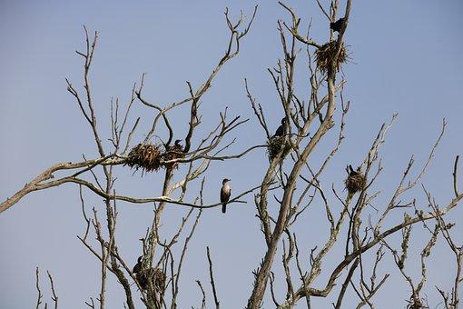 Nature, Wildlife, Bird, Nest, Tree