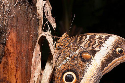 Butterfly, Fly, Animal, Slightly, Insect, Wing, Bent
