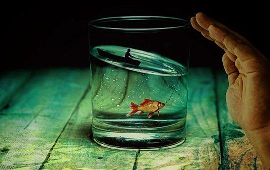 Water Glass, Angler, Fish, Goldfish, Surreal, Miniature