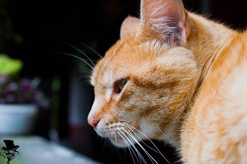 Cat, Animals, Mountain, Home, Peace, Look, Pet