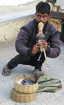 India, Snake, Snake Charmers, Asia, Man, Demonstration